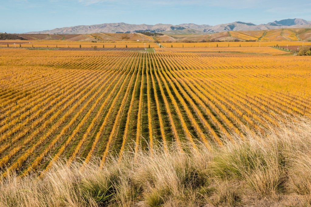 Marlborough region, New Zealand
