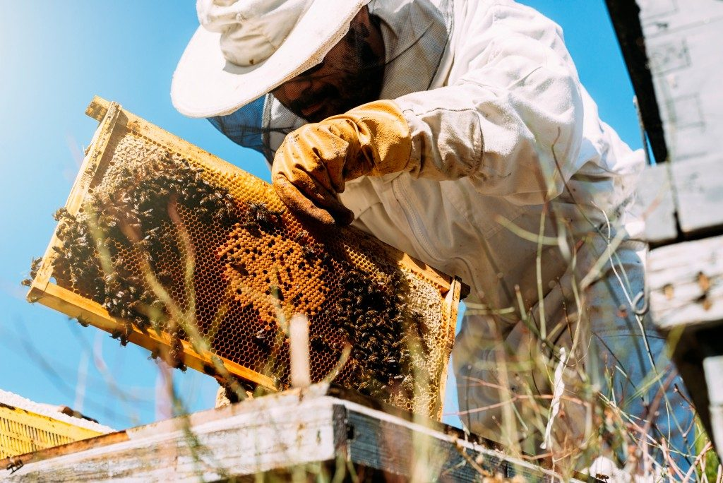 man attending to a bee farm